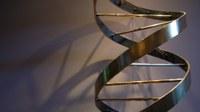 Mutație genetică rară asociată formei primar progresive a SM