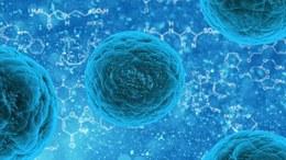Terapia cu celule stem combo în SM